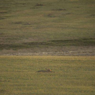 prairie dog sitting on it's hole on the prairie